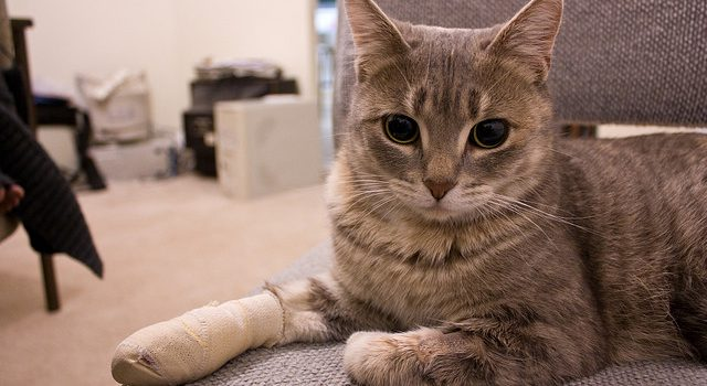 Knowing What to Do in Case of a Pet Emergency